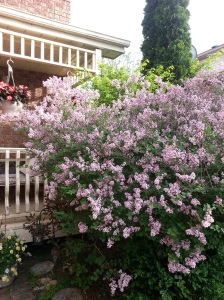 Lovely lilacs boost romance
